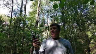 Тест в лесу: 27 МГц vs 145 МГц