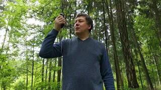 Летний тест раций в лесу
